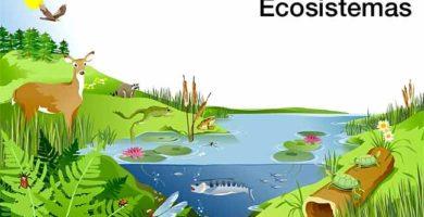 diferencias y semejanzas entre biomas y ecosistemas