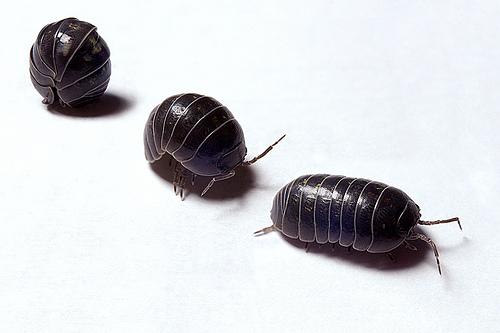 bichos e insectos para niños