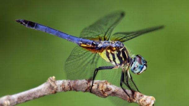 nombres de bichos e insectos