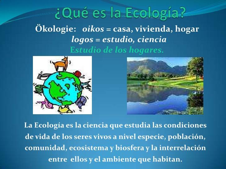 cual es la diferencia entre una actividad ecologica y una educacion ambiental