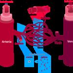 diferencias entre venas y arterias cuadro comparativo