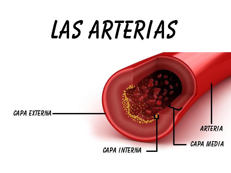 tipos de venas y arterias
