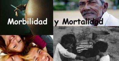 morbilidad y mortalidad oms