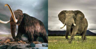 Mamut y Elefante