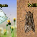 Polilla y Mariposa